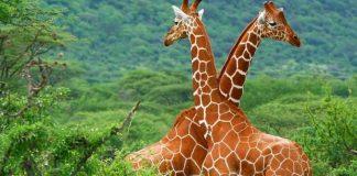 faune-africaine