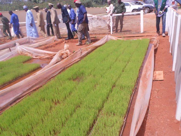 production du riz